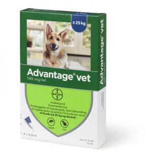 Advantage loppemiddel Hund (25-40Kg)-æske med 4 behandlinger til store hunde