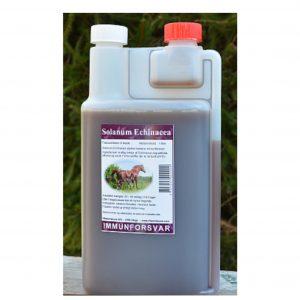-Solanum-echinacea-immunforsvar
