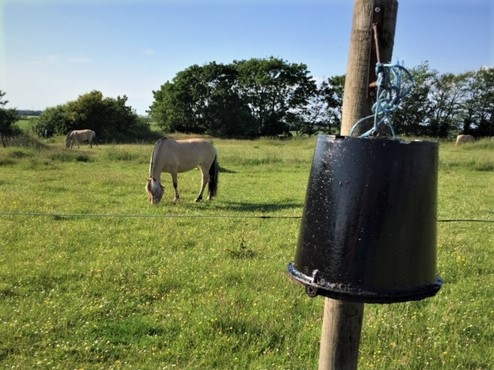 heste-insektbeskyttelse-sticky-trap-på-spand