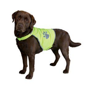 Labrador med Neongul Sikkerhedsvest til hunde
