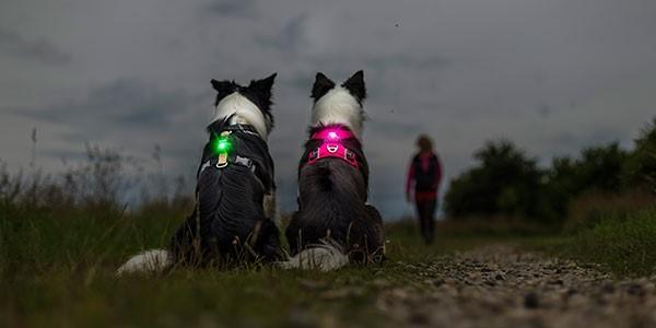 Orbiloc Light - sikkerheds lygte til hunde