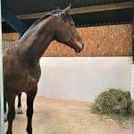 Hest på traepille og traepillesmuld
